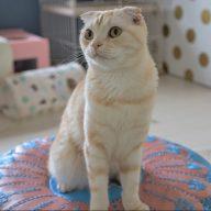 猫スタッフ「ちくわ」(写真:水野さちえ)