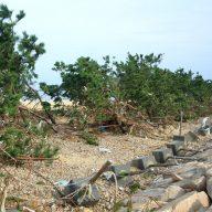 南芦屋浜・高潮被害