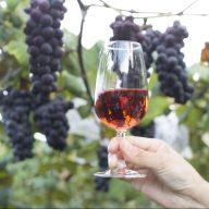 ワイン(写真:赤磐市 商工観光課)