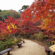 長谷池の周りにある通称「もみじのトンネル」写真:神戸市立森林植物園提供)