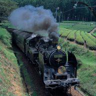 茶畑を走る大井川鐵道SL (写真提供:静岡県観光協会)